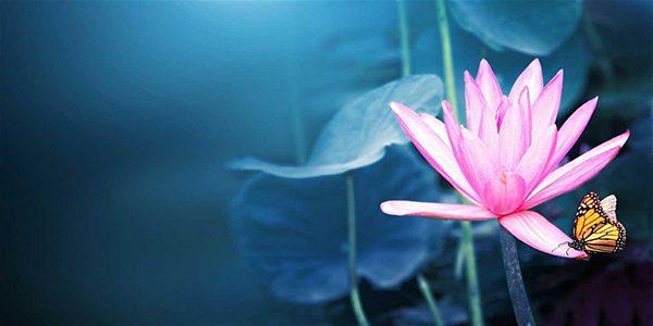lotus-600